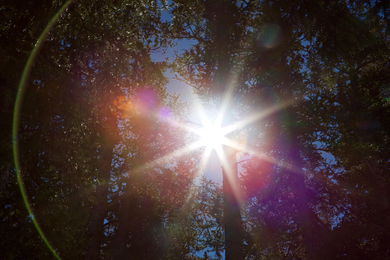 20170316_BC_Sun Burst Flare_Trees_1_JonResnick.jpg